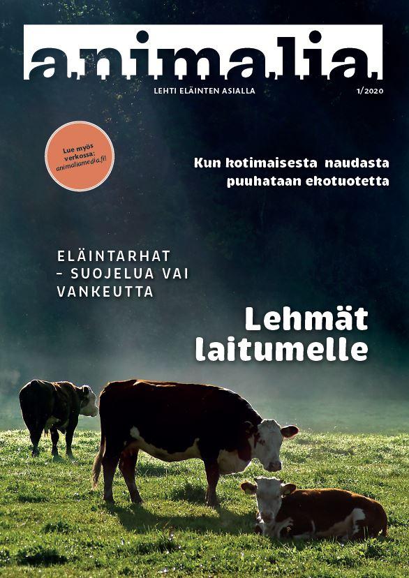 Animalia-lehden 1/2020 kansikuva, jossa on lehmiä laitumella.