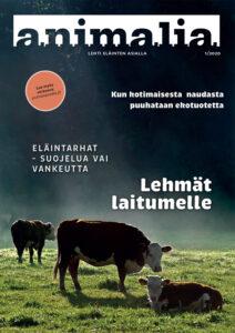 Animalia-lehden kansi 1/2020. Kannessa on nautoja sumuisella laitumella.