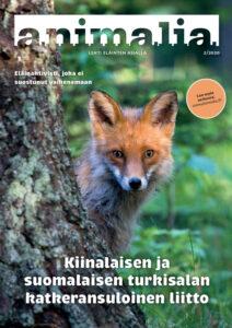Animalia-lehden kansi 2/2020. Kannessa on kettu kurkistaa puun takaa.