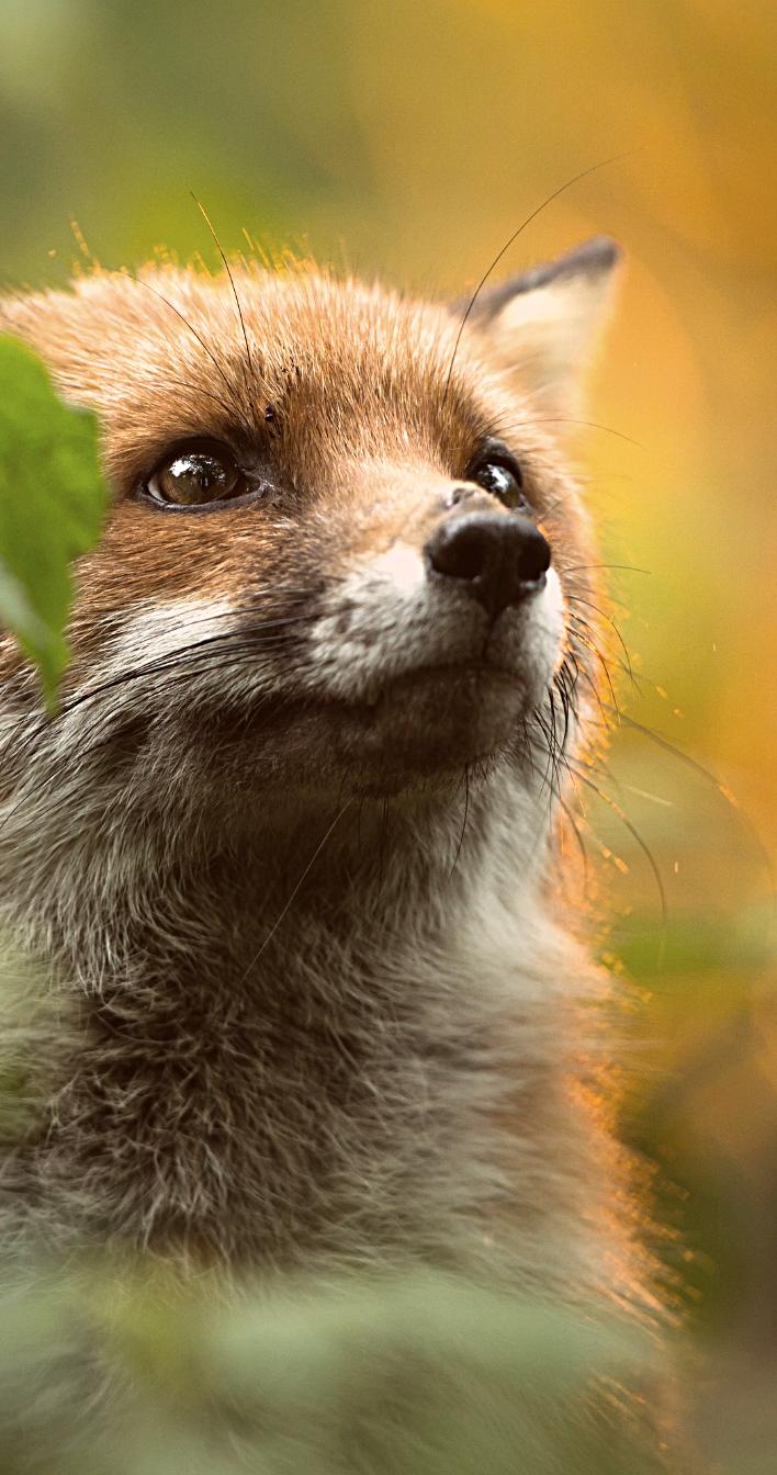 Kuukausilahjoitus eläimille antaa mahdollisuuden tulevaisuuteen. Kuvituskuva.