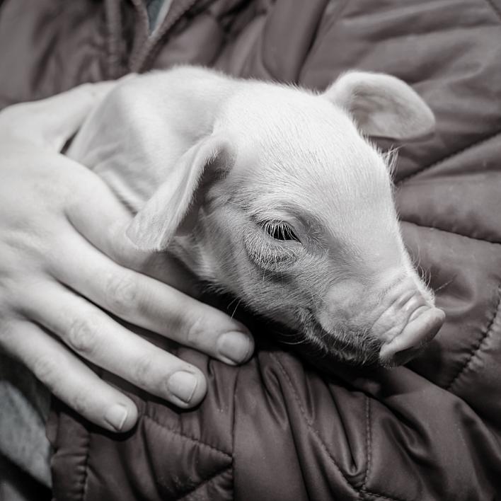 Yrityslahjoitus auttaa eläimiä ja muuttaa arvonne teoiksi. Kuvituskuva.