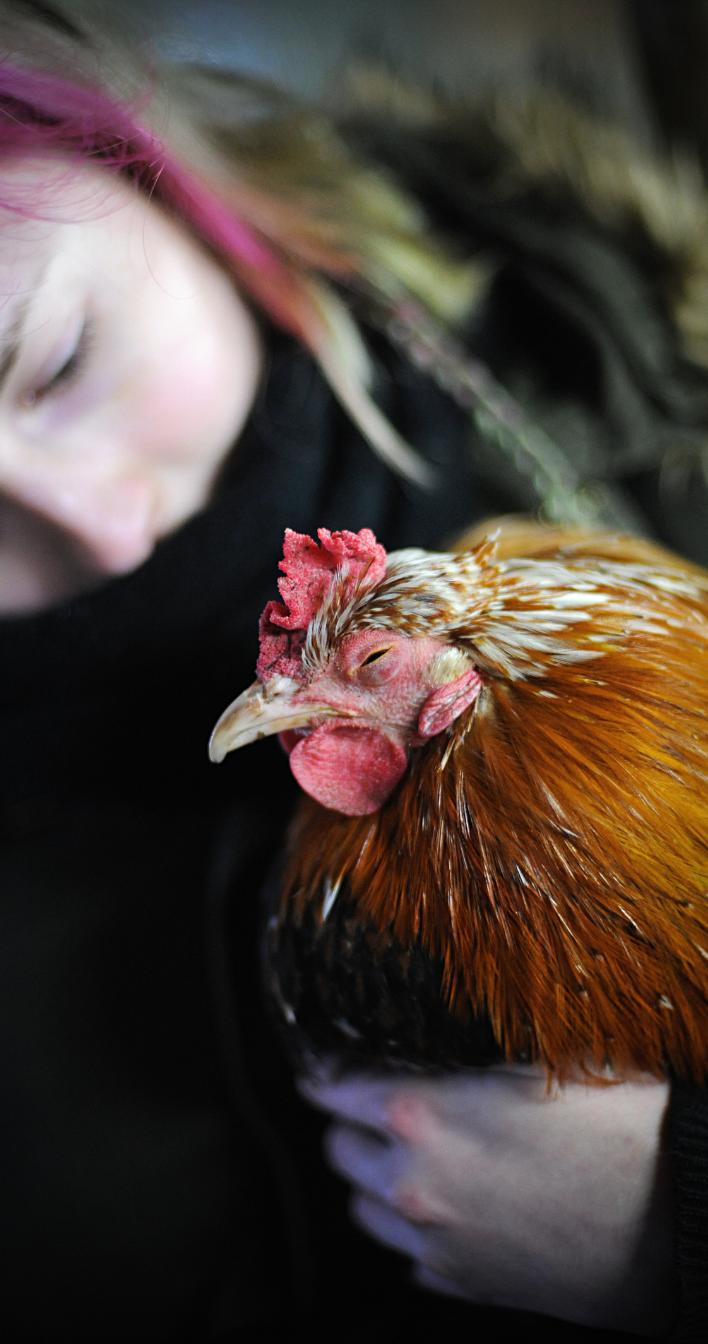 Tule mukaan ja auta eläimiä omalla tavallasi. Jokainen on tärkeä. Kuvituskuvassa kana ja ihminen.
